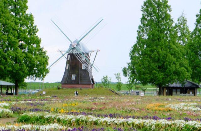 風車とお花